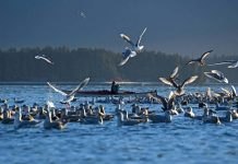 woman sea kayaking surrounded by seagulls