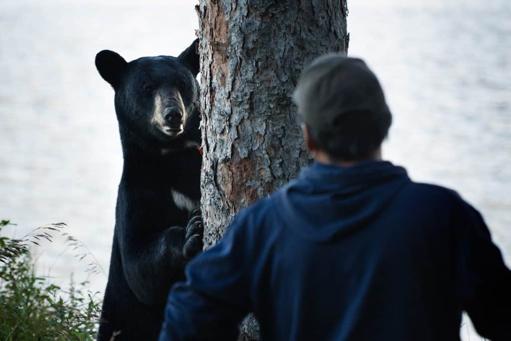 black bear surprising a man