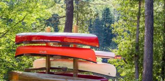 Behold: the family diy canoe tree.   Photo: Michael Hewis