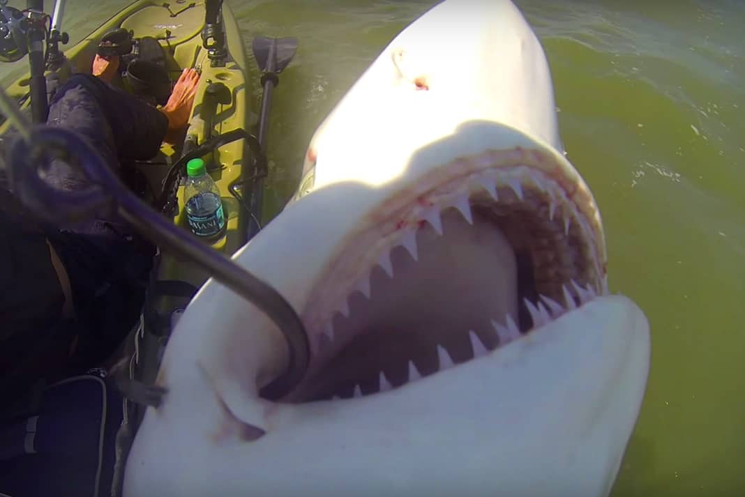 Shark caught while kayak fishing