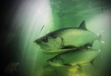 Underwater photo of fish